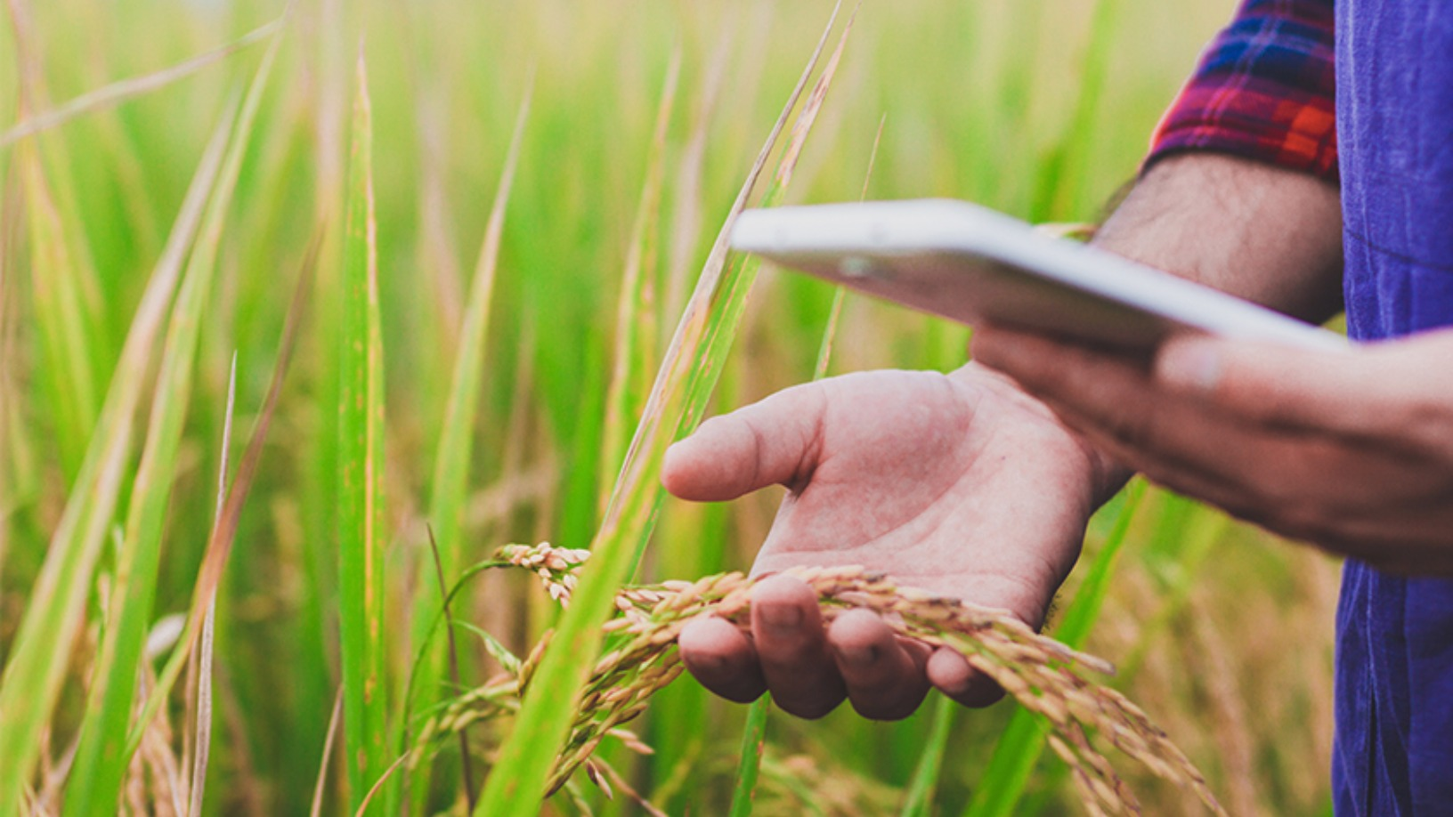 Yimutian: China agriculture e-commerce's comeback kid