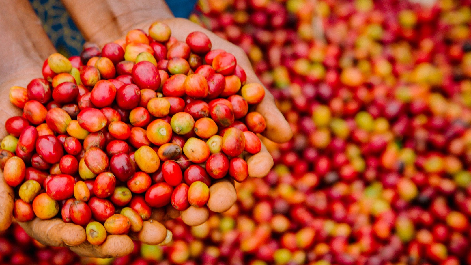 Farmer Connect: Blockchain powered platform tracing coffee beans from field to cup