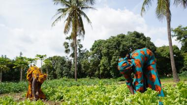 Pula: Pioneering insurtech helps to improve Africa's food security |  CompassList