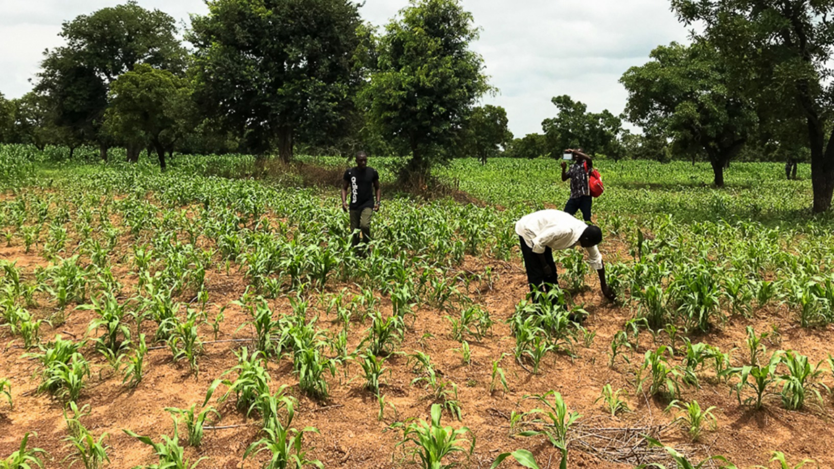 AgroCenta: Providing market access and credit to African smallholder farmers