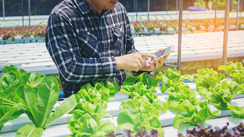 CloudYoung: Smart agritech for every process, from farm to table