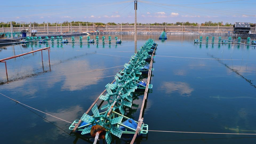 Collaborations and challenges: Why Hatch is positive on aquaculture in Southeast Asia