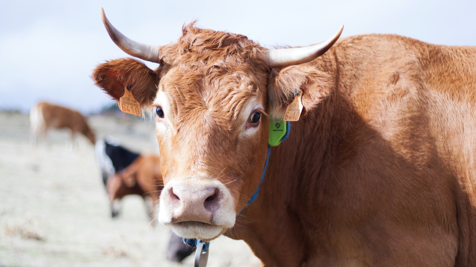 Smart agritech pioneer Digitanimal helps ranchers better manage their cattle and ensure animal welfare