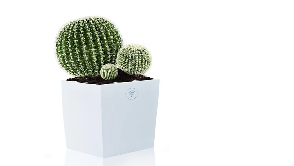 Bioo's green power: Electricity, Wi-Fi from a flower pot